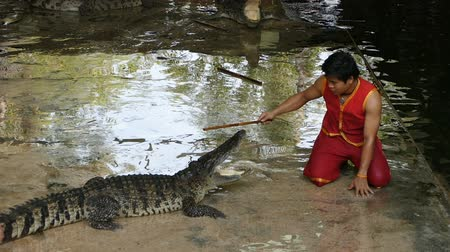 čelisti : NAKHON PATHOM, THAILAND - February    5 : Crocodile show at Samphran Crocodile Farm , it is one of the most impressive crocodile farm in the world at Nakhon Pathom , Thailand on February 5, 2019