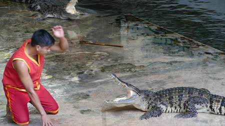 yaratık : NAKHON PATHOM, THAILAND - February    5 : Crocodile show at Samphran Crocodile Farm , it is one of the most impressive crocodile farm in the world at Nakhon Pathom , Thailand on February 5, 2019