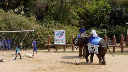 crocodilo : NAKHON PATHOM, THAILAND - February    5 : Show of Elephant playing football at the most impressive Samphran Crocodile Farm at Nakhon Pathom, Thailand on February 5, 2019 Vídeos