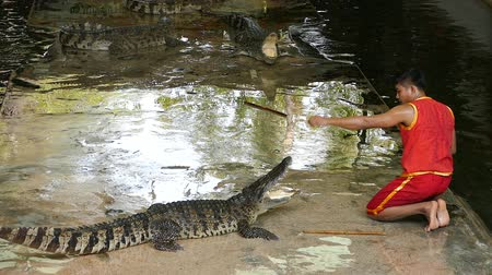 jacaré : NAKHON PATHOM, THAILAND - February    5 : Crocodile show at Samphran Crocodile Farm , it is one of the most impressive crocodile farm in the world at Nakhon Pathom, Thailand on February 5, 2019