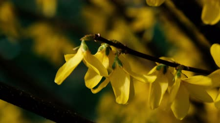 forcefulness : Yellow flowers macro motion shoot
