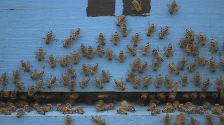 хрупкость : bees cleaning a wooden apiary entrance