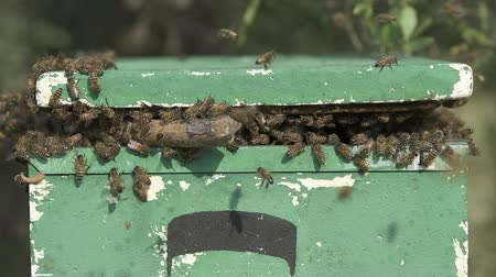 bee swarm just moved into a polystyrene apiary