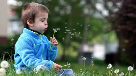 dilek : Happy cute caucasian boy, blowing dandelion outdoors in spring park