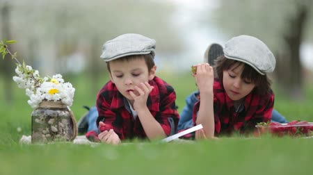 snack : Two children, boy brothers, reading a book and eating strawberries in the park, spring blooming garden Stock mozgókép