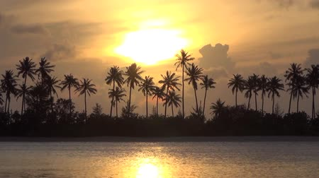 тропический : Palm trees and sunset time lapse