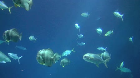 sualtı : beautiful fish underwater Stok Video