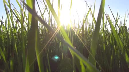 walking through the grass with sunlight