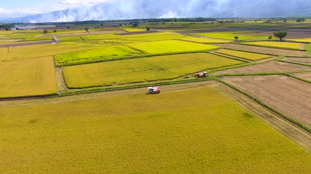 a natureza : Aerial view of rice field .Taiwan.