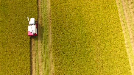 食物 : Aerial view of Combine harvester machine with rice farm