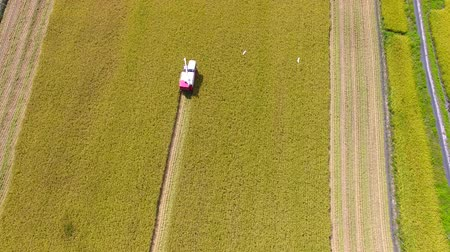 трактор : Aerial view of Combine harvester machine with rice farm