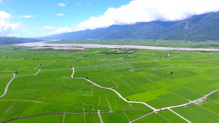 montar : Aerial view of rice field valley. taiwan.