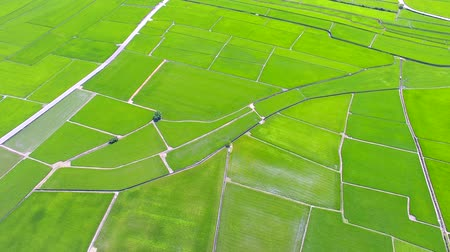planta : Aerial view of rice field valley. taiwan.
