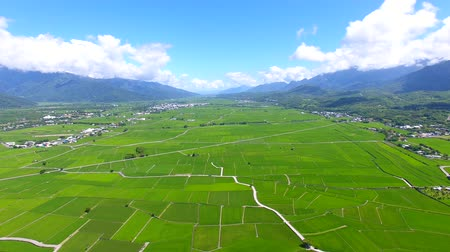 zelený : Aerial view of rice field valley. taiwan.