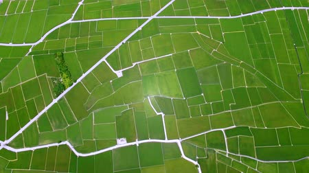 сельскохозяйственный : Aerial view of rice fields. Chishang. Taiwan