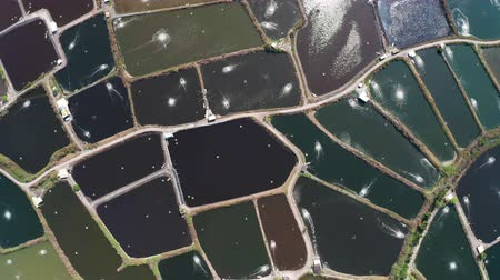 çiftlik hayvan : aerial view of fish farm and coast. Taiwan.