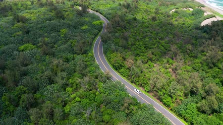 podróż : Aerial view of road in beautiful green forest and sea coast Wideo