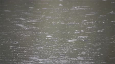 pantanal : Rain ripples on the surface of the water Stock Footage