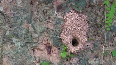 hole of the ant on ground Stok Video
