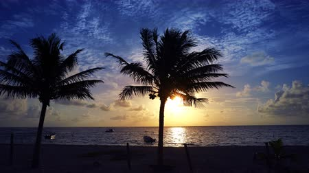 Mayan Riviera palm trees beach sunrise in Caribbean sea of ??Mexico Stok Video