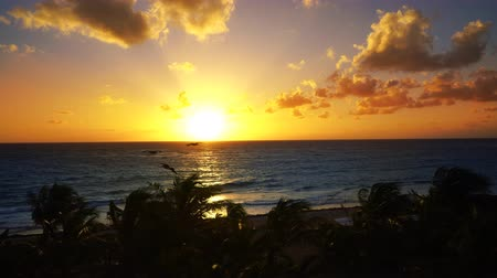 Mayan Riviera Caribbean sea sunrise beach in Mexico Pelican flying