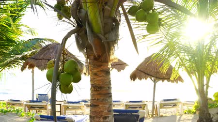 tuvalet : Coconut palm trees in Caribbean beach of Mayan riviera in Mexico
