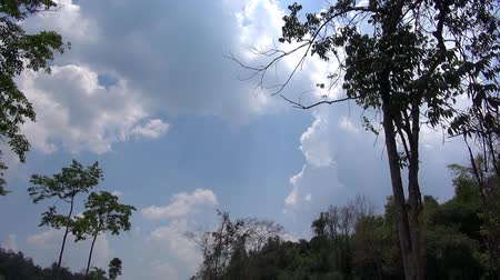 venkovské scény : Distant Eagle.  Looking up at a cloudy tropical sky framed by jungle trees, an eagle briefly enters the scene on the left. Taken in Kaeng Krachan National Park in Thailand. Dostupné videozáznamy