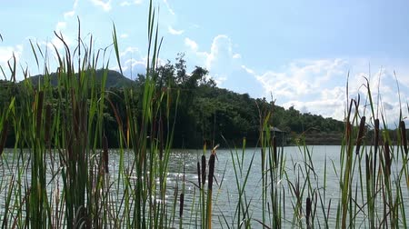 kopec : Gentle Breeze on a Lake.  A gentle breeze disturbs the surface of a lake. On the far bank is a hut nestled in the jungle. Backdrop is jungle covered hills and a blue sky decorated with puffy white clouds.