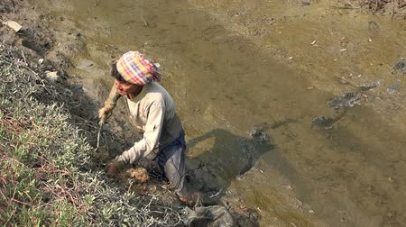araneae : Traditional Crab Hunter - 3  PHETCHABURI, THAILAND - CIRCA MAY 2015: An unidentified Asian man hunts for crabs in the mud bank of a mangrove swamp Phetchaburi, Thailand, on CIRCA MAY 2015. Stock Footage