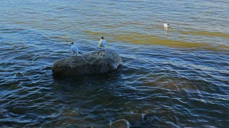 pictured : Lakeshore summer stones water birds Stock Footage