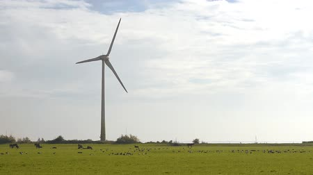 Rural landscape with working wind turbine. Netherlands
