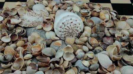 sivilceli : Big heap of small shells