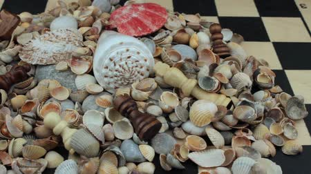 sivilceli : On a chessboard seashells