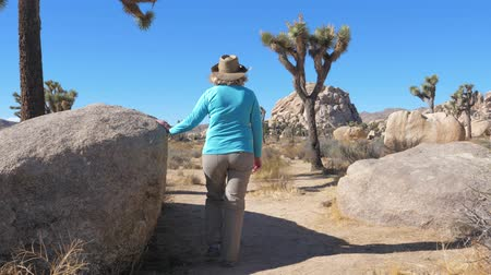 arka görünüm : Hiking Women In The Mojave Desert, Among The Cacti, Joshua Trees And Stones Stok Video