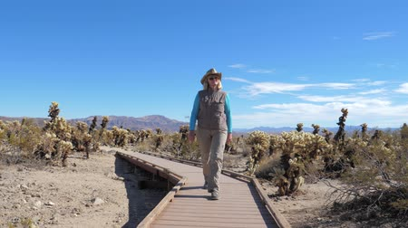 chapéu : Mature Woman Walks On A Wooden Footpath In A Cactus Garden Cholla, Slow Motion Vídeos
