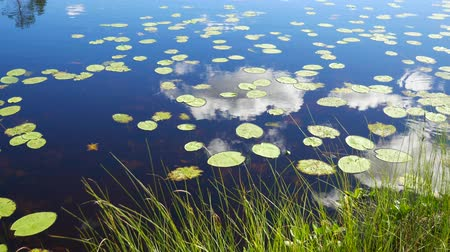 odráží : Leaves Lilies Float On Lake Surfaces Where Reflect Sky And Clouds 4K