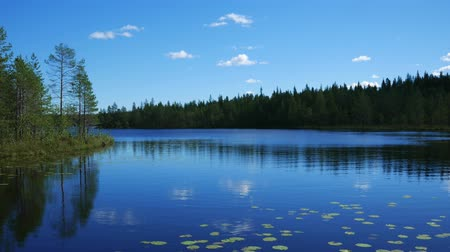 odráží : Northern Nature Lake On Surface Of Lily And Reflecting Blue Sky And Clouds 4K