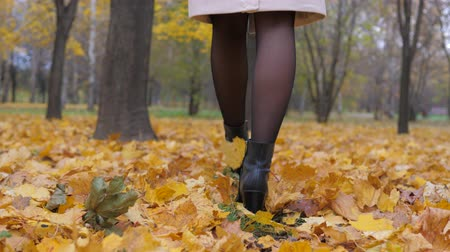 модный : Feet Lady In Pantyhose And Black Boots Is On The Autumn Carpet Of Yellow Foliage Стоковые видеозаписи