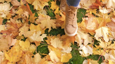 fallen leaves : Woman Legs In Boots Close Up Go Through The Green Lawn With Yellow Fallen Leaves