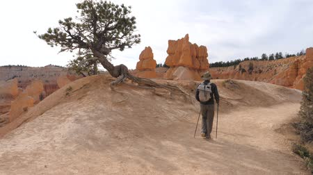 kovboy : Active Hiker Man Climbs A Route Near The Rock Wall Of The Bryce Canyon Stok Video