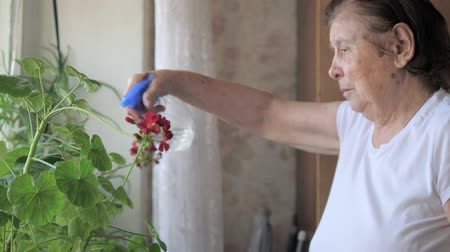 трепет : Old Woman Sick With Parkinsons Sprayed Water With Flowers In The House Стоковые видеозаписи