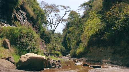 akát : View Of The Jungle In The River Canyon