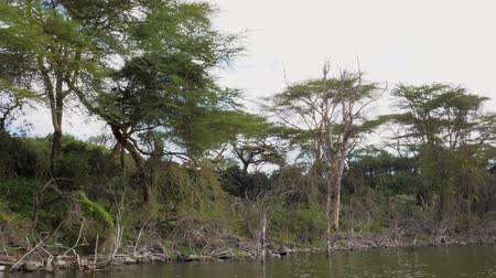 akát : The Movement On The Water Near The Shore With Mangroves And Acacias In Africa