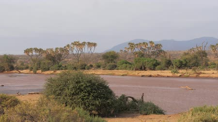 samburu : The Views Of The African River With Brown Water And Beautiful Stock Footage