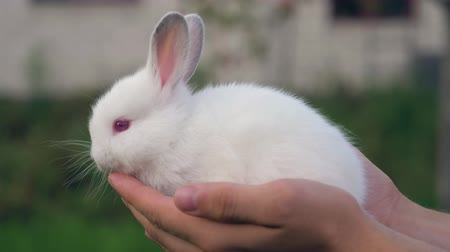 прижиматься : Close Up Of White Rabbit Cub In Hand