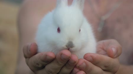 прижиматься : Close Up Hands Holding A Little Cub White Fluffy Rabbit Стоковые видеозаписи