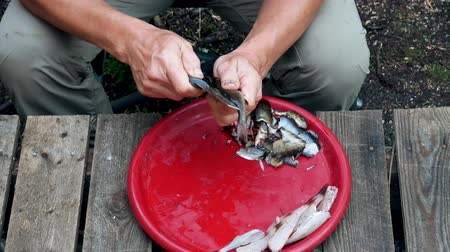yakalandı : Man Fisherman Cleans With A Knife Freshly Caught Fish Stok Video
