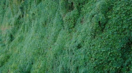 hera : Overgrown With A Green Carpet On The Ground Surface On A Hillside