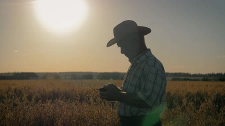 owies : Elderly Farmer Agronomist In Cowboy Hat On The Field Checks The Ripening Of Crop