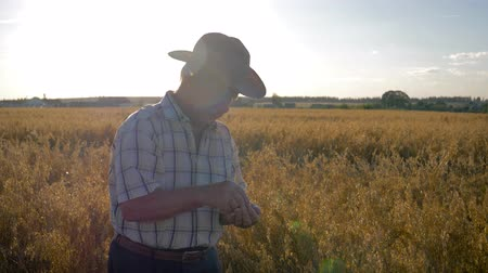 agronomist : Farmer Businessman In Cowboy Hat On The Field Checks The Ripening Of Grain Crops